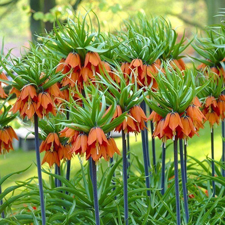 Топ найбільш смердючих рослин